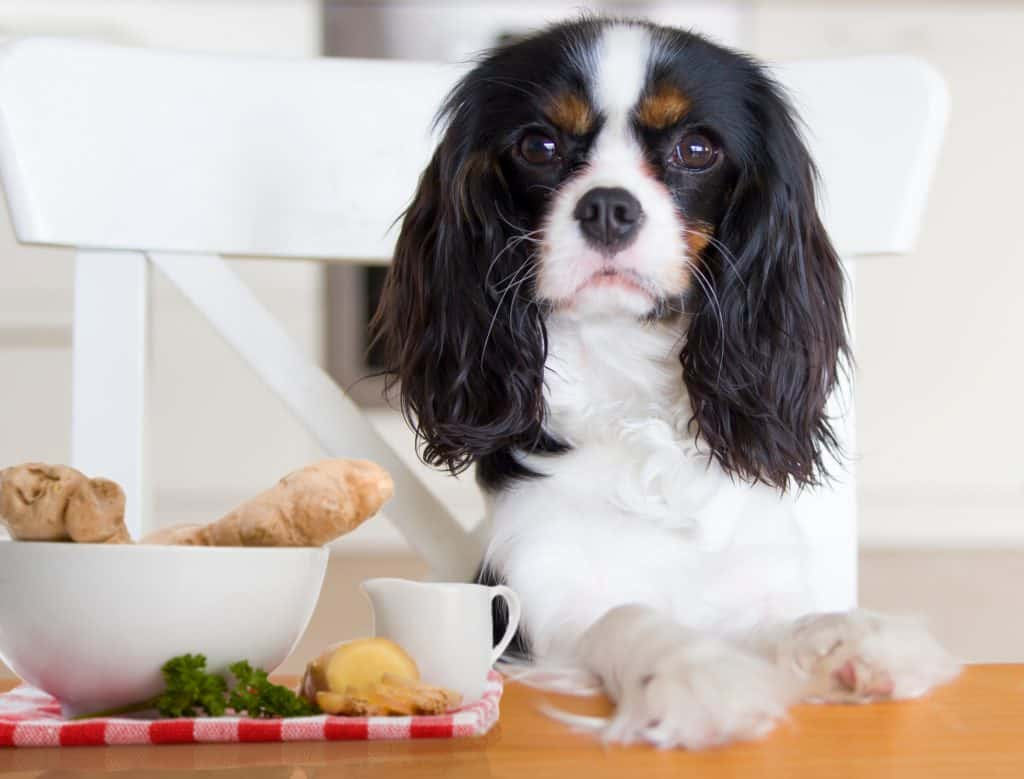 Can Dogs Eat Ginger? Is Ginger A Great Addition To Your Fido's Diet? 1