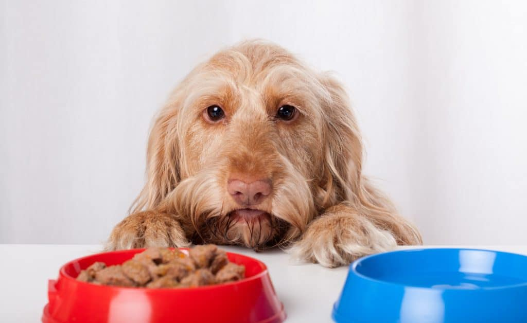 Best Dog Food for Autoimmune Disease – [year] Buying Guide and Frequently Asked Questions 32