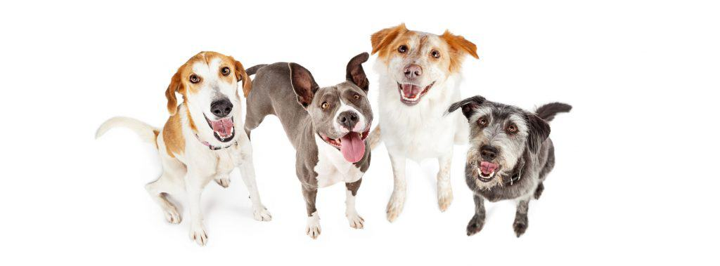 [year] Best Dog Food for Loose Stool: Diets For A Dog's Sensitive Tummy 37