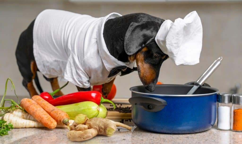 Can Dogs Eat Ginger? Is Ginger A Great Addition To Your Fido's Diet? 3