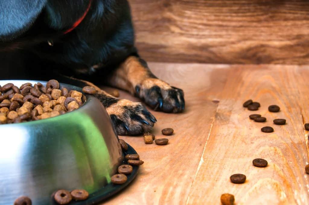 Best Dog Food For Bad Breath