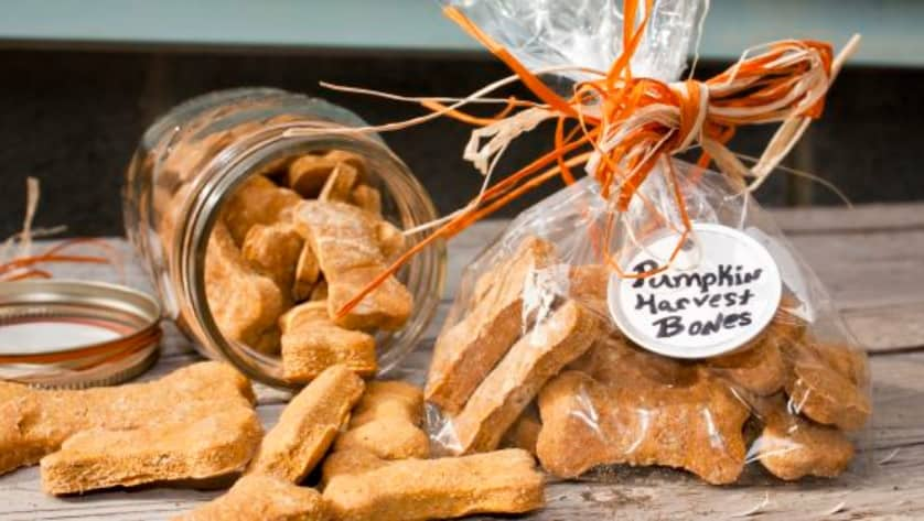 Can Dogs Eat Pumpkin? What Are the Benefits of Pumpkin to Your Dog's Health? 6