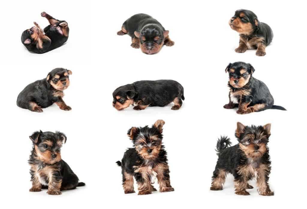 When Do Dogs Stop Growing? What Are the Factors That Affect Their Growth? 2