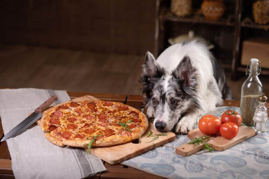 Can Dogs Eat Pizza? Are All Types Of Pizzas Bad For Dogs? 1