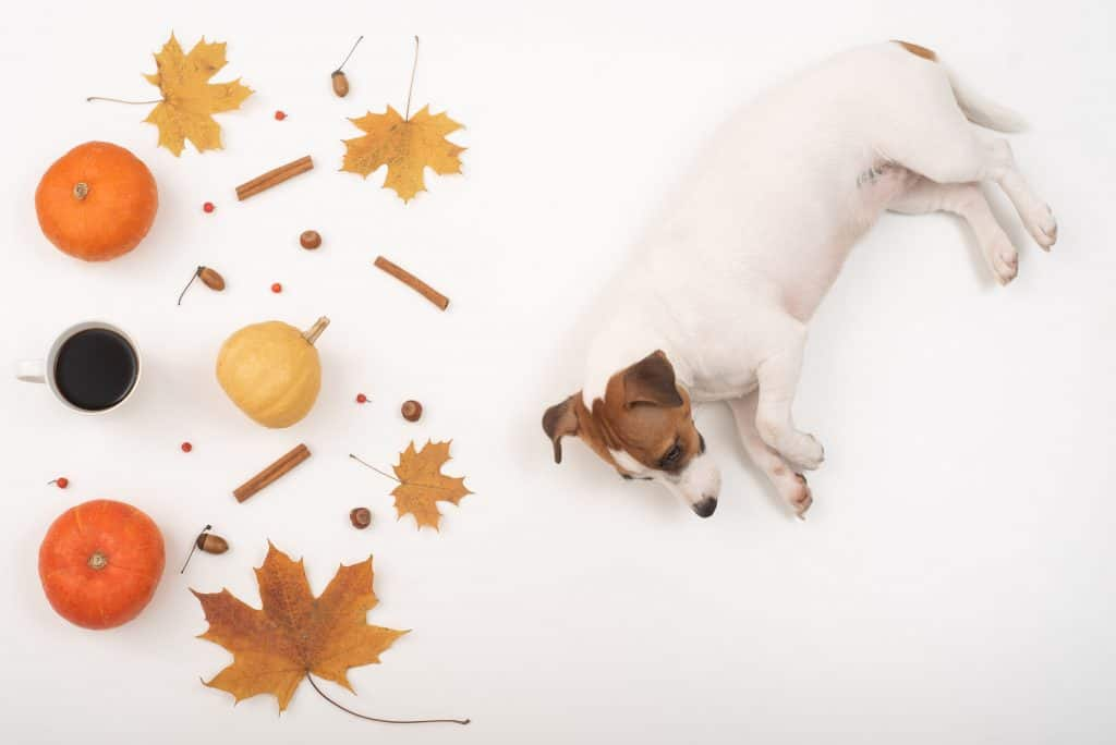 Can Dogs Eat Cinnamon? What Happens If Your Dog Eats Too Much Cinnamon? 4