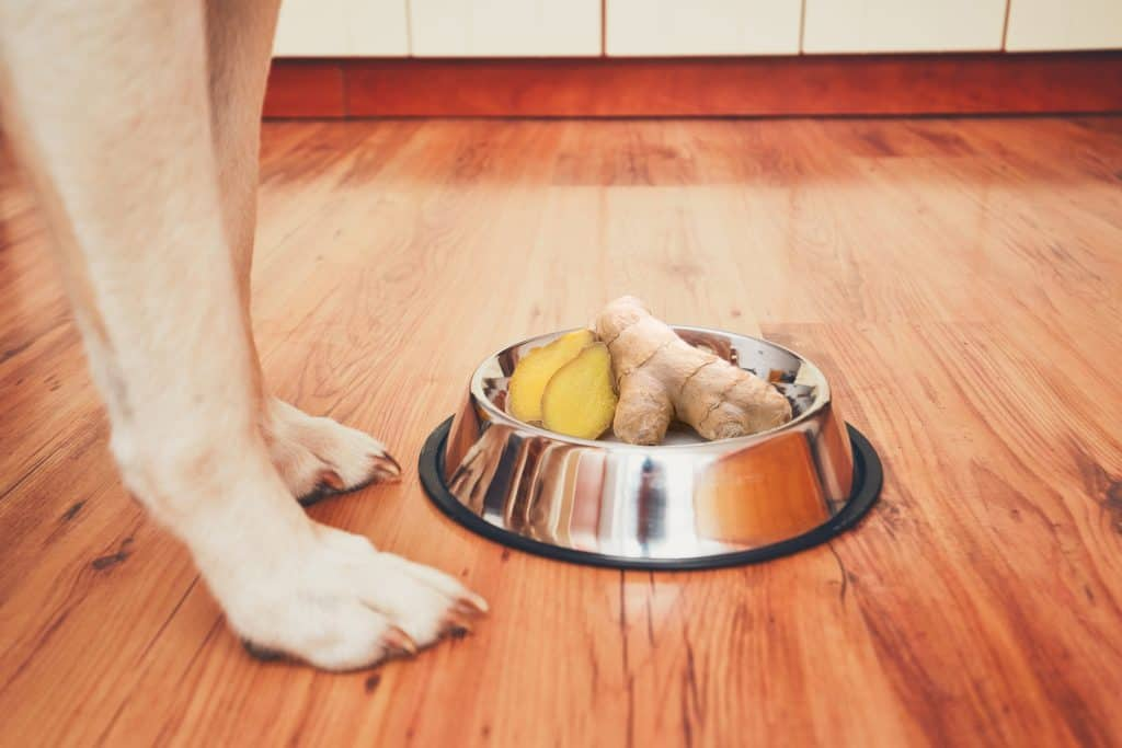 Can Dogs Eat Ginger? Is Ginger A Great Addition To Your Fido's Diet? 2