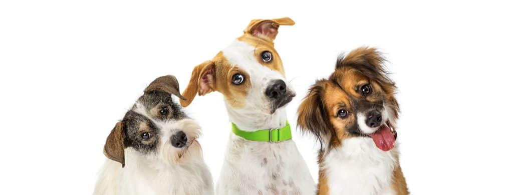 Can Dogs Get Hiccups? How Could You Stop Hiccups in Dogs? 2