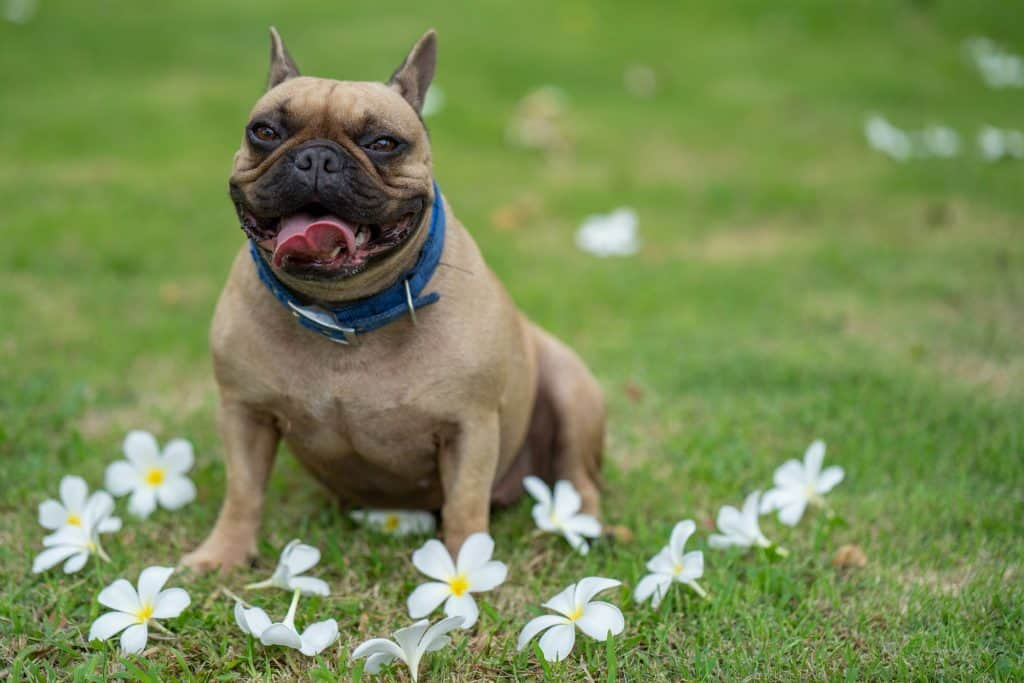 What's the Best Dog Food for Bad Breath? What to Look For When Choosing a Dental Health Food for Your Dog? 23
