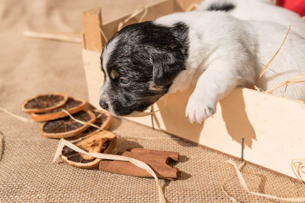 Can Dogs Eat Cinnamon? What Happens If Your Dog Eats Too Much Cinnamon? 3
