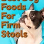 [year] Best Dog Food for Firm Stools and Healthy Digestion