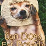 Can Dogs Eat Bread? What You Ought To Know About Dogs & Bread Revealed