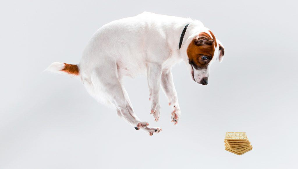 Can Dogs Eat Crackers? Are Crackers Toxic to Dogs? 4