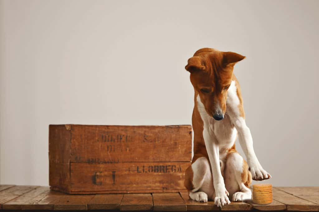 Can Dogs Eat Crackers? Are Crackers Toxic to Dogs? 2