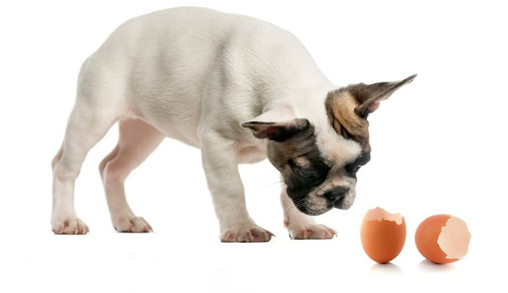 Can Dogs Eat Egg Shells? Are Egg Shells Safe For Dogs? 3