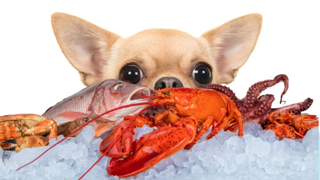 Can Dogs Eat Lobster