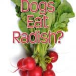 Can Dogs Eat Radishes? What Should You Do If Your Dog Eats Radishes?
