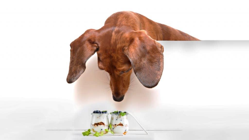 Can Dogs Eat Yogurt