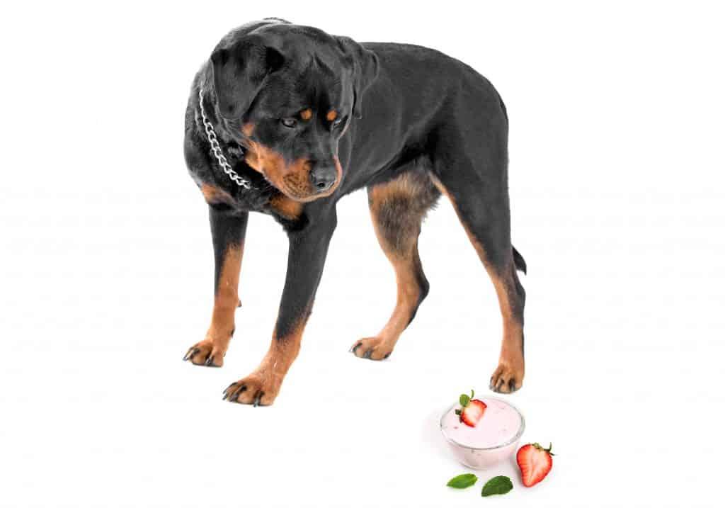 Can Dogs Eat Yogurt? Is Yogurt Safe for Dogs? 1