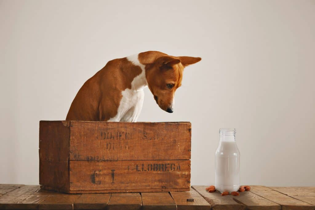 Can Dogs Have Almond Milk? Pros & Cons Of Almond Milk Disclosed 3