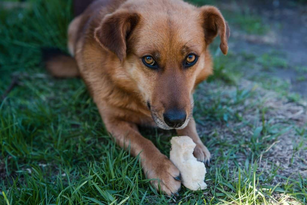 Can Dogs Eat Bread? What You Ought To Know About Dogs & Bread Revealed 2