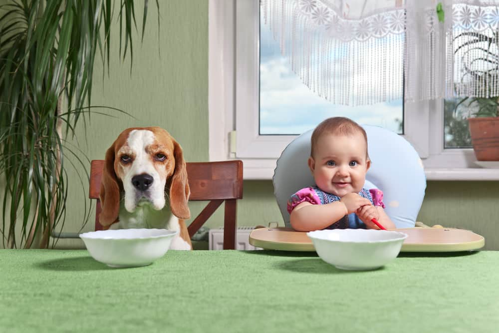 Can Dogs Eat Baby Food? Can This Food Bring Happiness To Your Doggo? 3