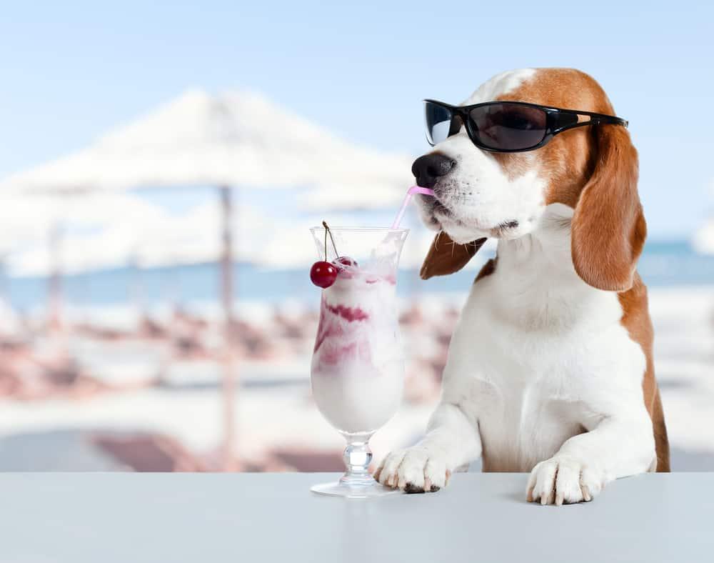Can Dogs Eat Yogurt? Is Yogurt Safe for Dogs? 2