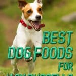 [year] Best Dog Food for Jack Russells: Right Diet For Your Active Pups
