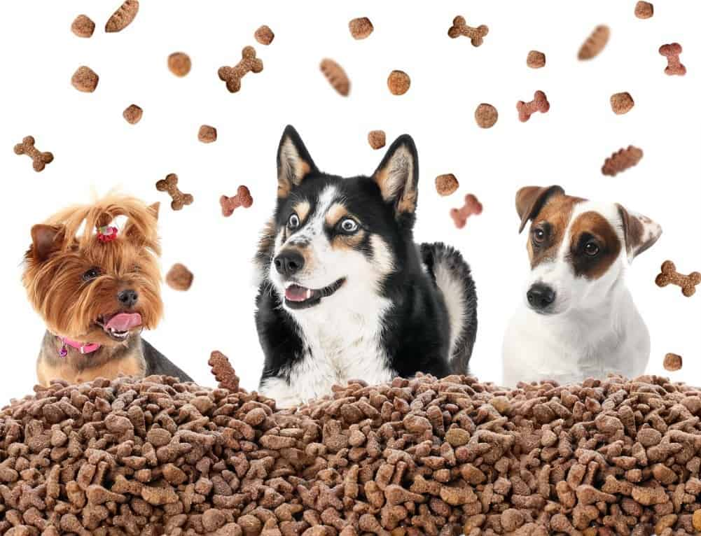 Best Dog Food For Loose Stool