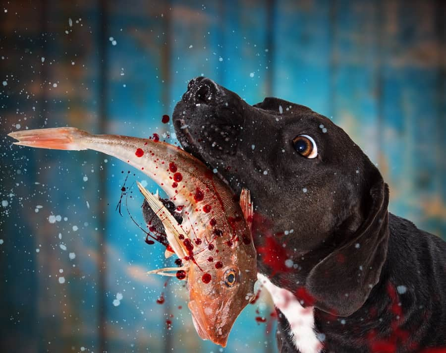 Can Dogs Eat Fish