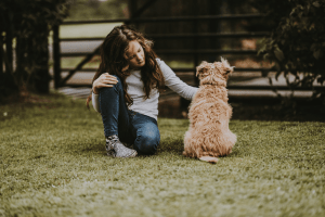 cocker spaniel dog with owner