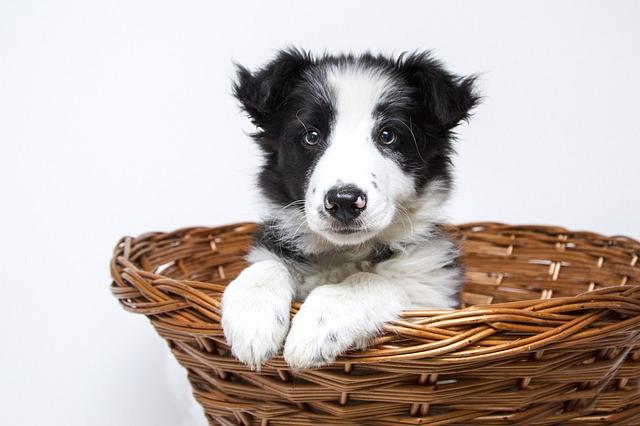 犬は嘔吐しやすい生き物