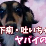 犬の下痢や嘔吐の症状って大丈夫?