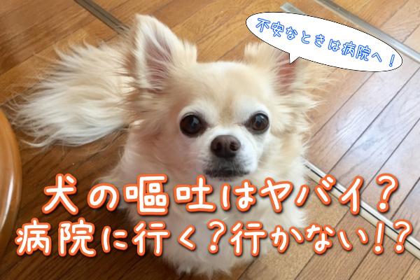 犬が嘔吐したら病院へ連れていく?