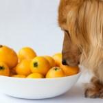 犬に与えても良い食材・悪い食材