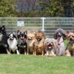 高齢者にオススメな犬種は小型犬の方がいいです