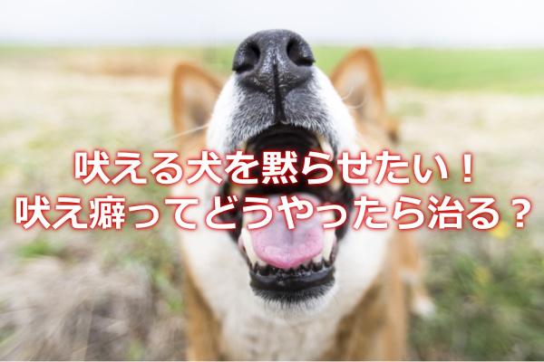 吠え続けるのをやめない犬