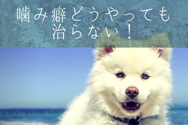 噛み癖が治らない犬をなんとか治したい