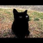 野良猫ちゃんズをモフモフしていたら黒猫ちゃんがモフられにやってきた!