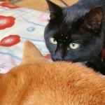 寒くてすぐにこたつに入る柴犬ちゃんと、寒さに負けず景色を眺める黒猫ちゃんの動画