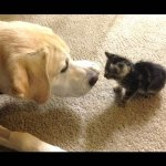 子猫と子猫を親目線で見守る犬たちの微笑ましい動画