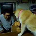 柴犬ちゃんが自分の意志を静かに主張していてカワイイ動画