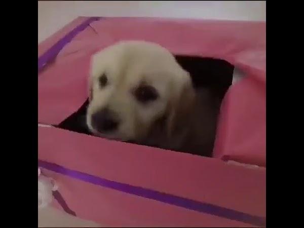 赤ちゃん犬との出会いに子供を産めないメス犬が最高に喜ぶ