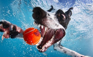 Blog12 Dogs Underwater 05