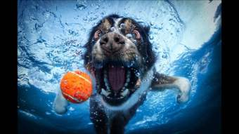 Blog12 Dogs Underwater 07