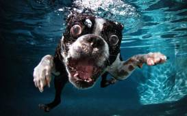 Blog12 Dogs Underwater 10