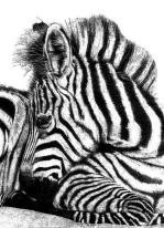 Blog97 Rob Agar Wildlife 01