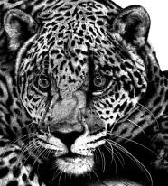 Blog97 Rob Agar Wildlife 03