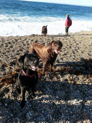 Blog07 Dogs Enjoying the Beach 02