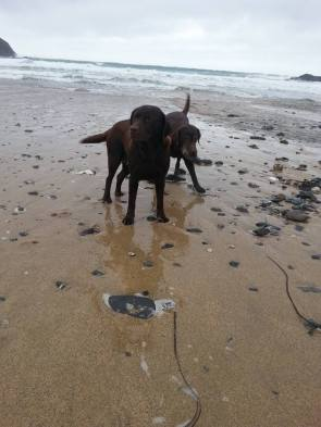 Blog07 Dogs Enjoying the Beach 03