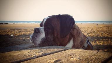Blog07 Dogs Enjoying the Beach 06